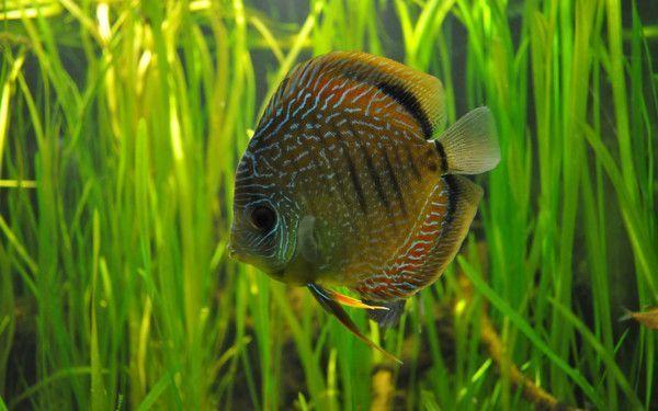 Les poissons en général 0eca7316