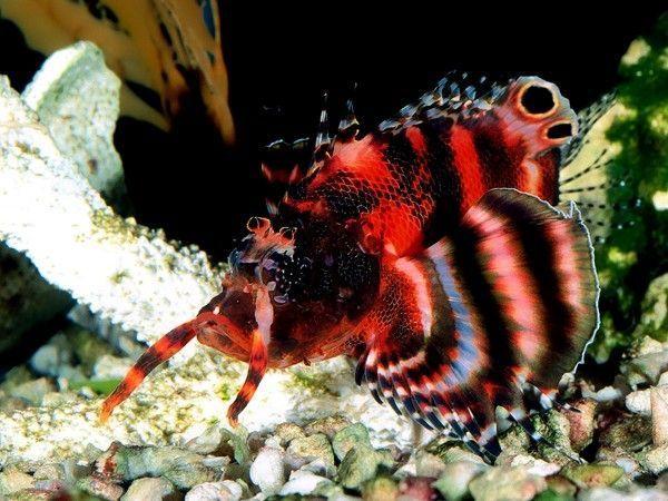 Les poissons en général 0fce41d7