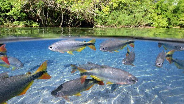 Les poissons en général 1080ca66