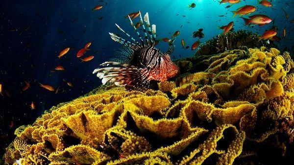 Les poissons en général 37d88769