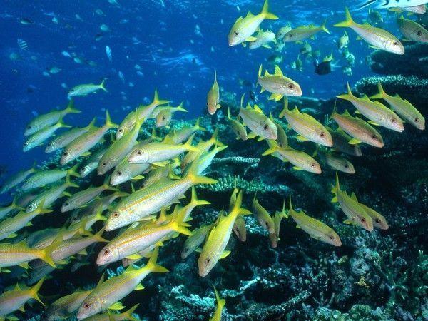 Les poissons en général 3bc5e38b