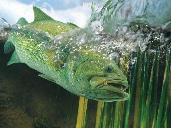 Les poissons en général - Page 2 41d17677
