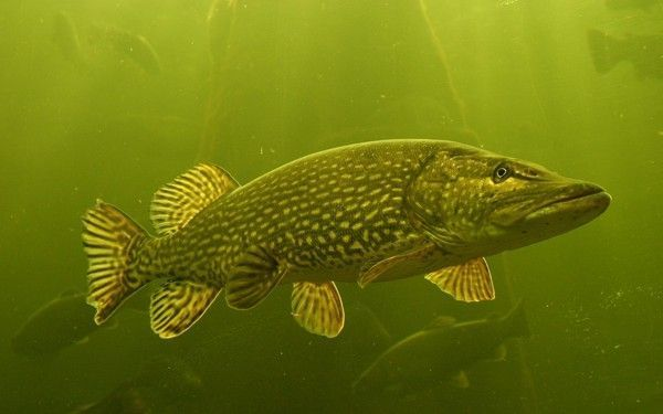 Les poissons en général 448f7e52