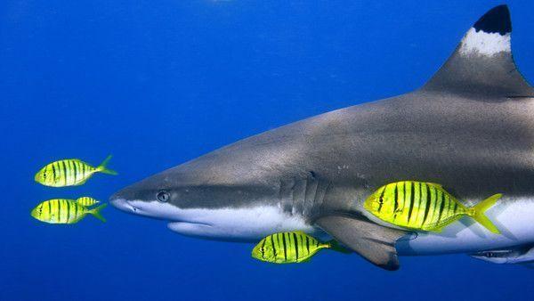 Requins 4700c4b4