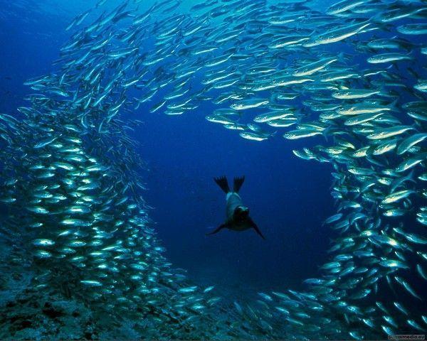 Les poissons en général - Page 2 505312fb