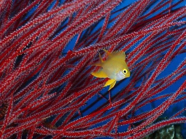 Les poissons en général - Page 2 51333a4d