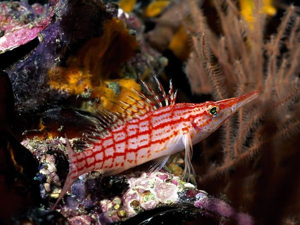 Les poissons en général 6c50c5e3