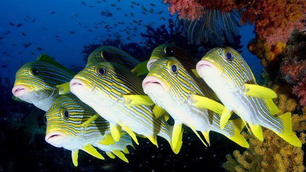 Les poissons en général 6e6c69a1