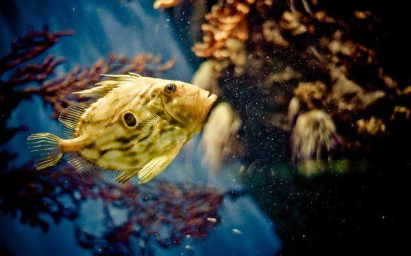 Les poissons en général 74bdf900