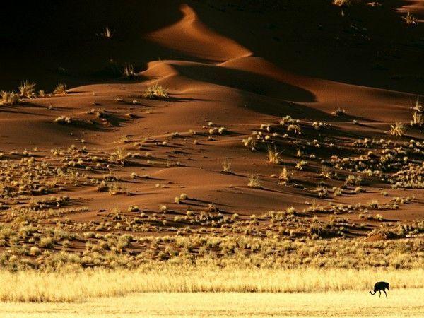 Rocheuses et déserts  7e377517