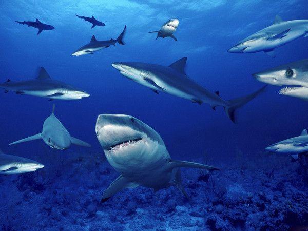 Requins 8c52e499