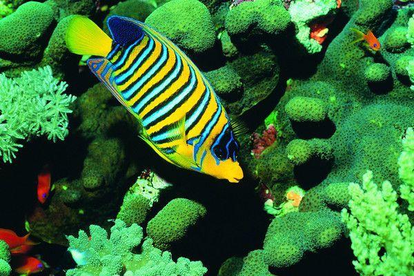 Les poissons en général 93853d69