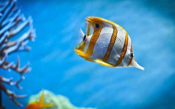 Les poissons en général 960bc767