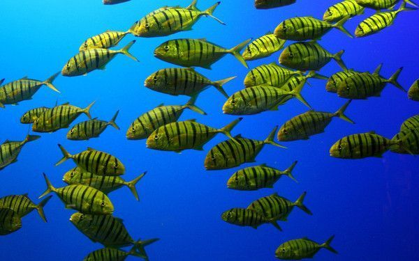 Les poissons en général 96e991f5