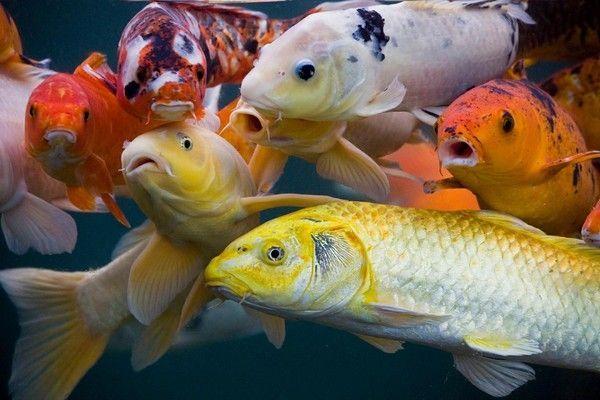 Les poissons en général 9e73a6df