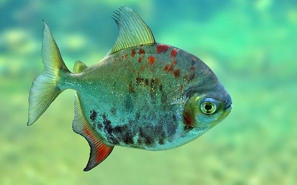 Les poissons en général A25f25de