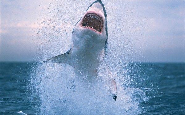 Requins Add4754f