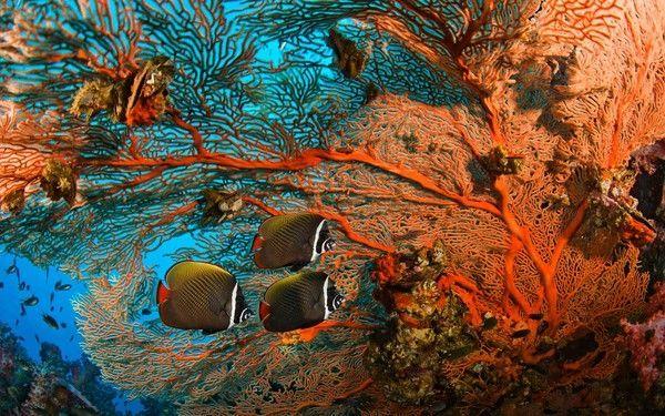 Les poissons en général B5c59dc2