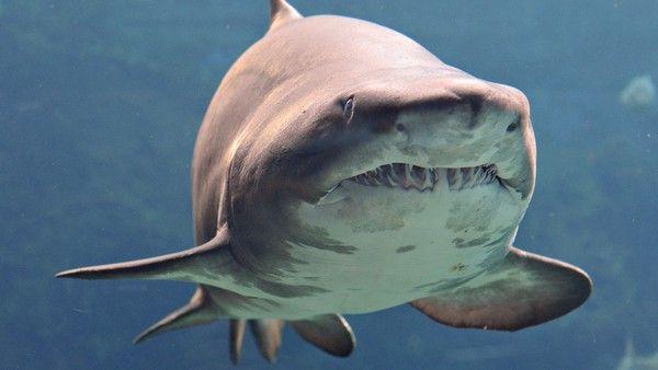 Requins C04f6658