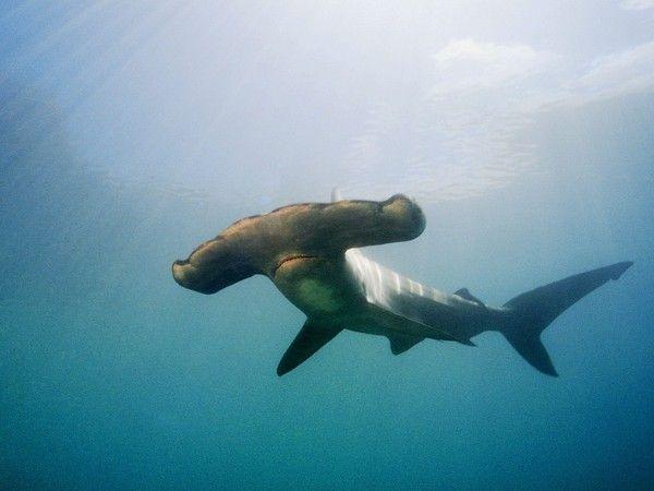 Requins Da1ef0f8