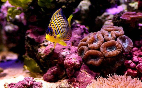 Les poissons en général Db71f57e
