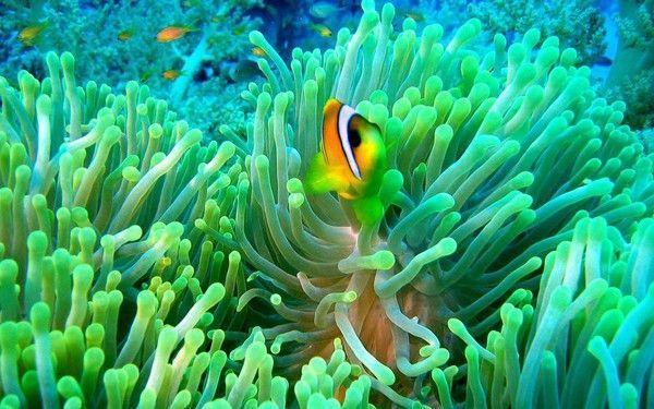 Les poissons en général E1ff6b98