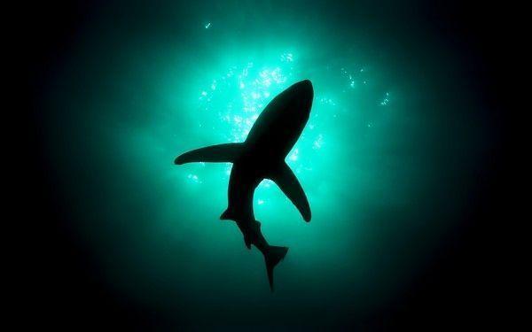 Requins F0aba23c
