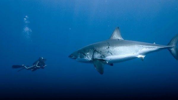 Requins F317934f